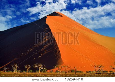 Beautiful landscape with big red dunes and trees at sunrise cloudy sky background Sossusvlei Namib Naukluft National Park Namibia