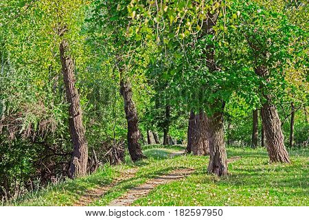 Path in the green deciduous forest on a sunny summer day