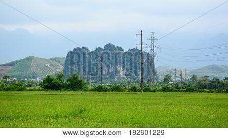 Paddy Rice Field In Northern Vietnam