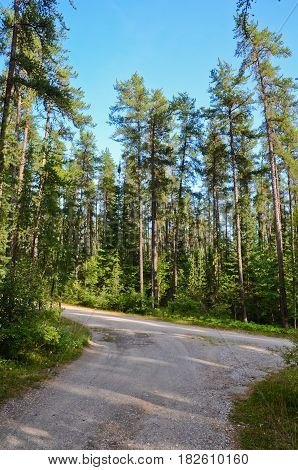 Picture of the Sunny forest near Superior Lake Canada