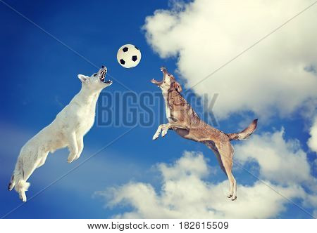 Two dogs catching a ball in midair