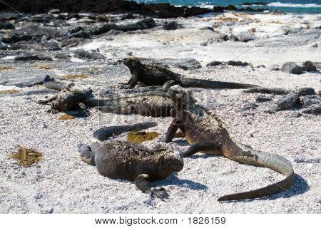 Galapagos_10