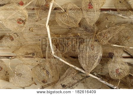 Detail of the dried fruits of Cape gooseberry on wooden board