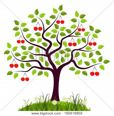 vector cherry tree isolated on white background