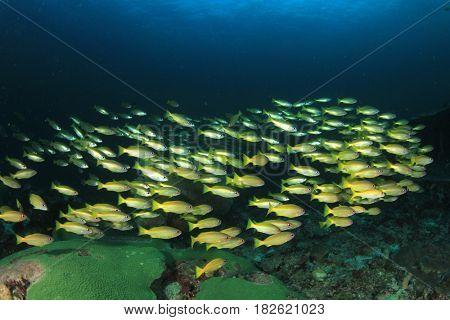 Coral reef fish underwater