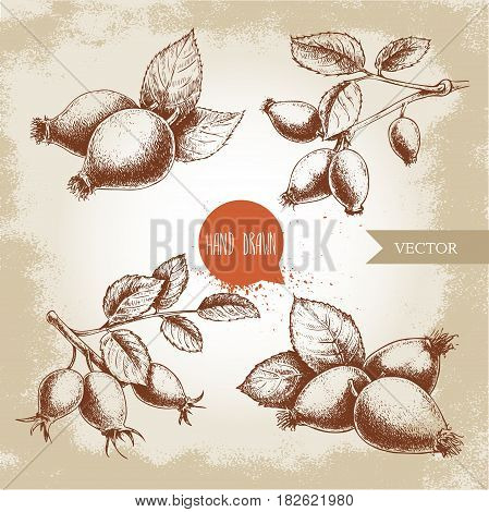 Hand drawn set of sketch style rose hips illustrations. Branch with berries and leafs. Health vector vintage illustration.