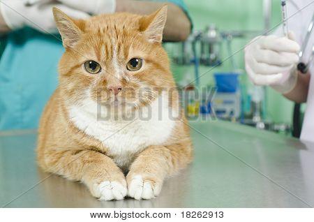 Garfield To The Vet