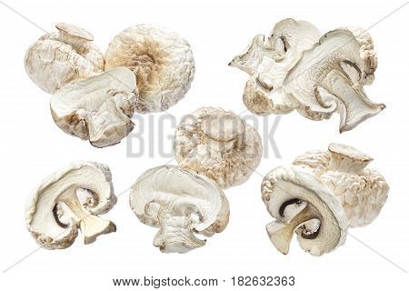 Dry mushrooms isolated on white background. Collection
