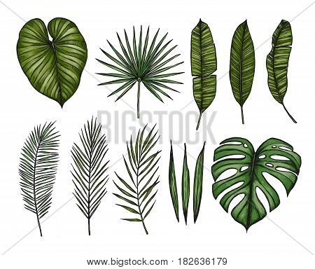 Hand Drawn Vector Illustrations - Palm Leaves (monstera, Areca Palm, Fan Palm, Banana Leaves). Tropi
