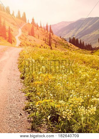Mountain path in Crested Butte Colorado .