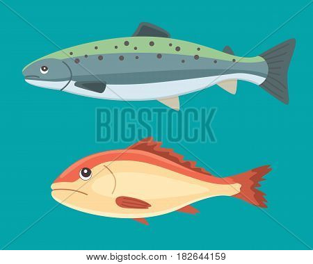 seafood vector black and white vintage illustration of salmon fish. Isolated object.