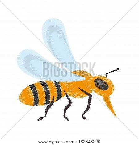 drawing bee insect flower pollen vector illustration eps 10