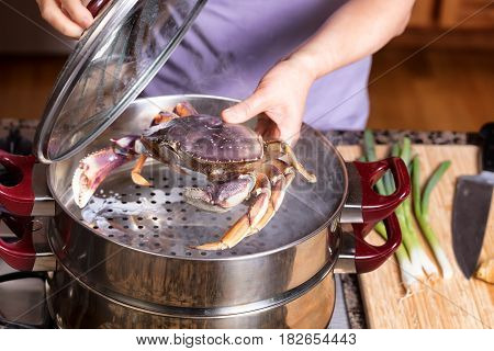Female hands placing live large crab into hot steaming pot. Selective focus on front of crab.