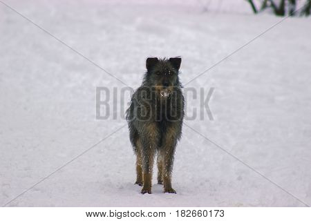 Lonely homeless dog stay on sidewalk at the winter