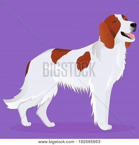 Irish red and white setter dog vector illustration