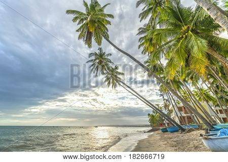 Tropical beach with coconut palm. This is the appropriate place for weekend vacation with family Paradise beach