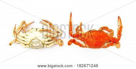 Two orange crabs on a white background