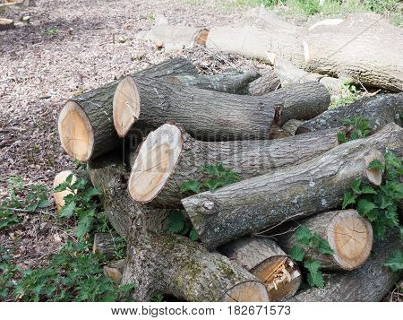 A Bunch Of Chopped Down Tree Logs In A Pile Waiting To Be Used As Fire Wood And To Be Burnt, Raw And