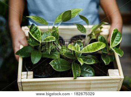 People holding wooden container with houseplant inside