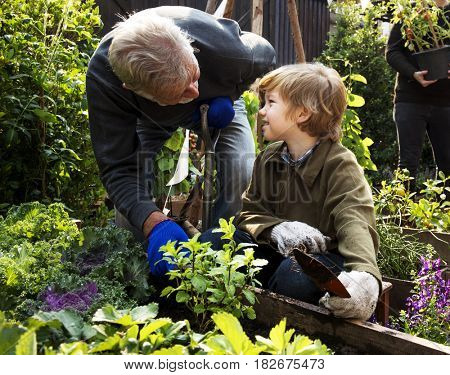 Dad and son gardening tranplanting outdoors together