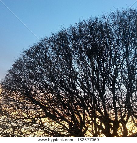 Blackened silhouette of a tree with bare branches against a blue sky with yellow and orange light peeking through at sunrise.