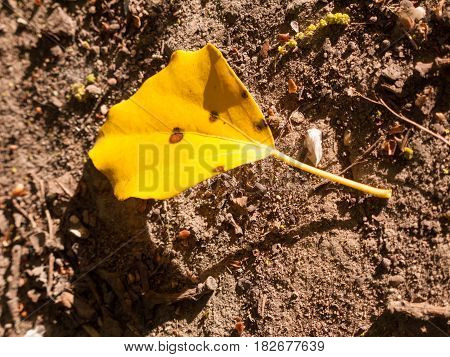 A Single Yellow Flower On The Soil Floor In The Light Of The Day In Spring Diseased Fallen Off Decay