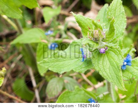 A Macro Of A Flower Head With Small Blue Flowers And Various Bits Of Dirt And Insects And Flowers An