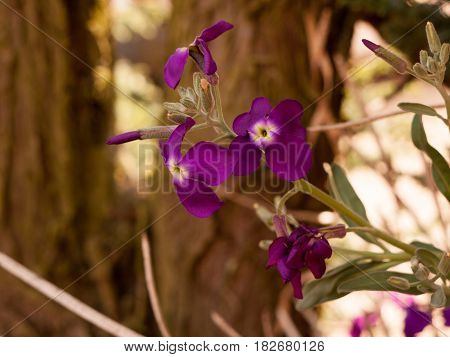 Gorgeous And Pretty Purple Flower Heads In Spring Blossoming And Ripe Reaching Out Away From Stem An