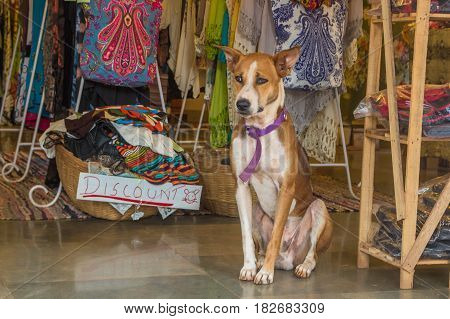 The Dog Is Sitting At Market In India, North Goa, Arambol
