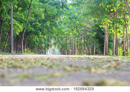 Many green forests are on the side of the road.