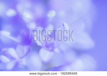 Abstract gentle blue background for a wedding card or invitation - blurred lilac flowers with stamens closeup.