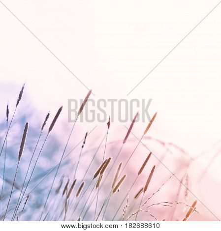 Summer abstract light blurred herb nature background.Toned square image with space for copy soft selective focus.