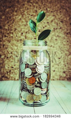 many coins in bottle with tree place on table vintage style investment concept
