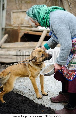 The elderly countrywoman plays with a puppy. The young dog sits on a chain. Sad landscape. Loneliness poverty desolation.