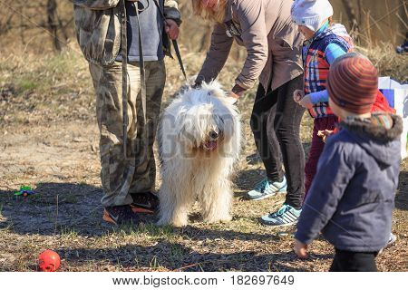 Gomel, Belarus - 9 April 2017: A Great Kind Dog Gets Acquainted With People In The Nature