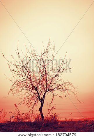 beautiful lone tree without leaves in a light mist on the sea