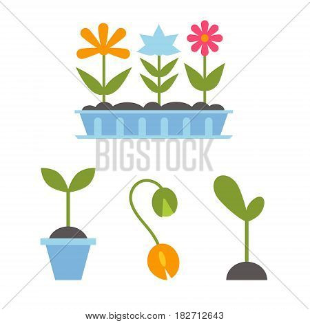 Stages of germination from the seed to the flower. Green icons stages of tree growth on white background. Spring Flowers In Pots.