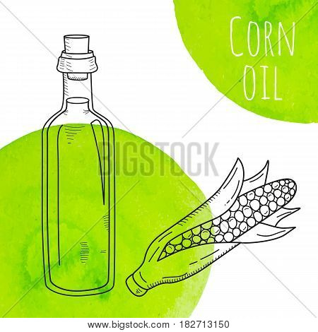 Hand drawn corn oil bottle with green watercolor spots. Isolated cute bottle with healthy cooking oil and corn. Sketchy doodle illustration for restaurant, organic shop. Glass jug with cork.