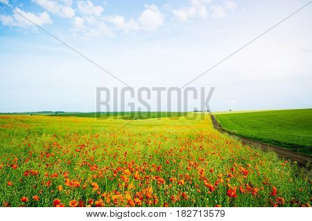 Awesome scene of the countryside. Fantastic and gorgeous day. Location rural place of Ukraine, Europe. Wonderful image of wallpaper. Ecology concept - climate change in the environment. Beauty world.
