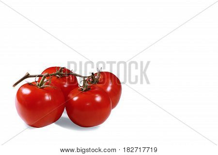 organic tomatoes on isolated branch on a white background