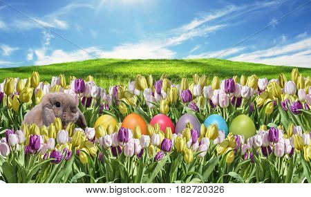 Bunny with Eggs and pink and white Tulip on grassland blue sunny sky greeting Happy Eastern textspace