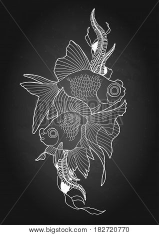 Graphic couple of telescope fish drawn in line art style. Vector freshwater creature isolated on the chalkboard.