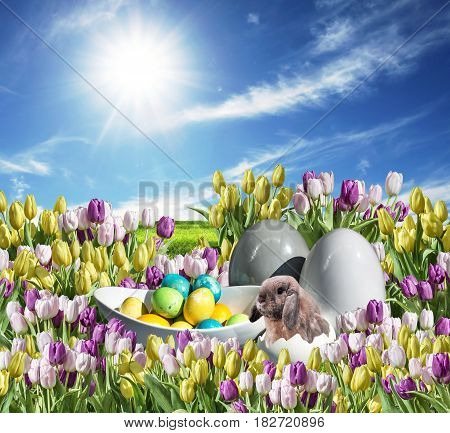 Bunny with Eggs decoration colorful Tulip on grassland blue sunny sky greeting Happy Eastern textspace