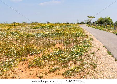 Ariel Sharon Park stands on a waste dump site. Hiriya, Israel