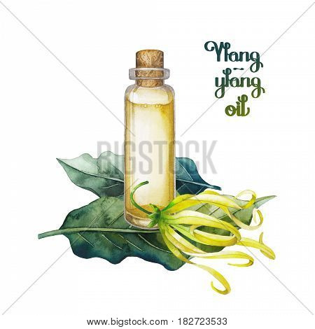 Watercolor ylang ylang oil. Hand painted bottle, leaves and flowers isolated on white background. Herbal medicine and aroma therapy