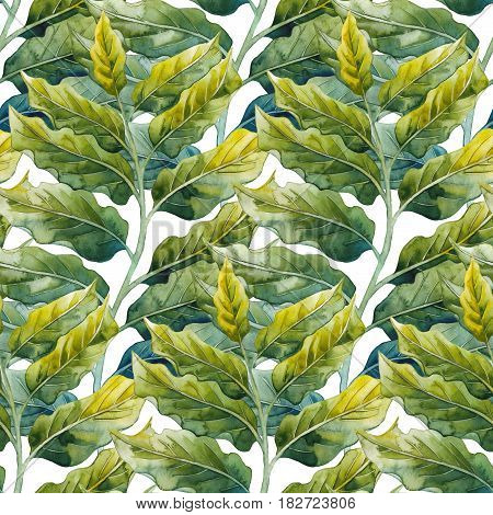 Watercolor ylang ylang seamless pattern. Hand painted leaves. Herbal medicine and aroma therapy
