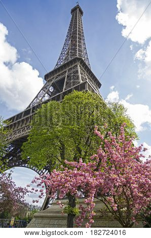 Blossoming tree against the backdrop of the Eiffel Tower. The beginning of April Paris France.