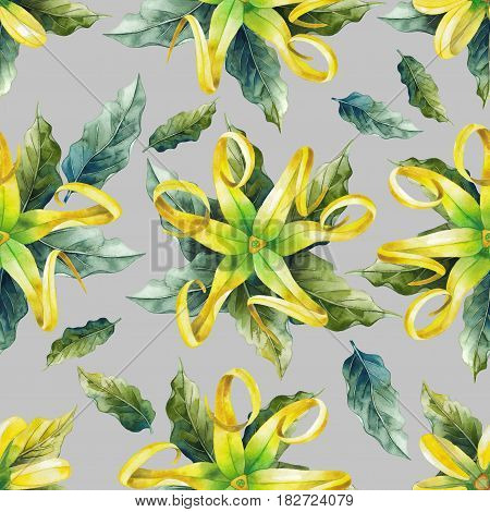 Watercolor ylang ylang seamless pattern. Hand painted leaves and flowers. Herbal medicine and aroma therapy