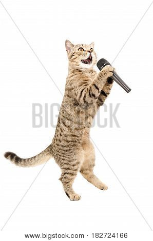 Cat Scottish Straight standing on hind legs with microphone, isolated on white background