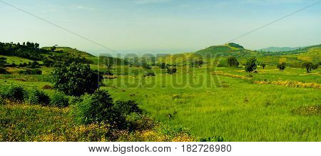 Agriculture landscape with fields of teff at morning in Ethiopia